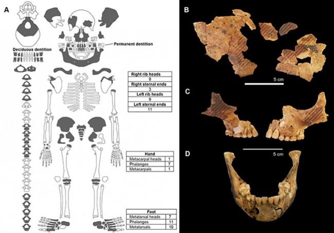 Những đứa trẻ bị cụt tay bí ẩn xuất hiện trong ngôi mộ 8.000 tuổi - Ảnh 2