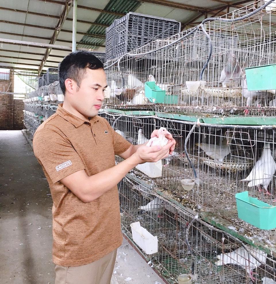 Kiếm tiền tỷ nhờ nuôi cá Koi, chim bồ câu - Ảnh 3