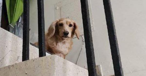 Chàng shipper và chú chó đi lạc hội ngộ sau 5 năm, hành động của chủ mới khiến ai cũng bất ngờ - Ảnh 1