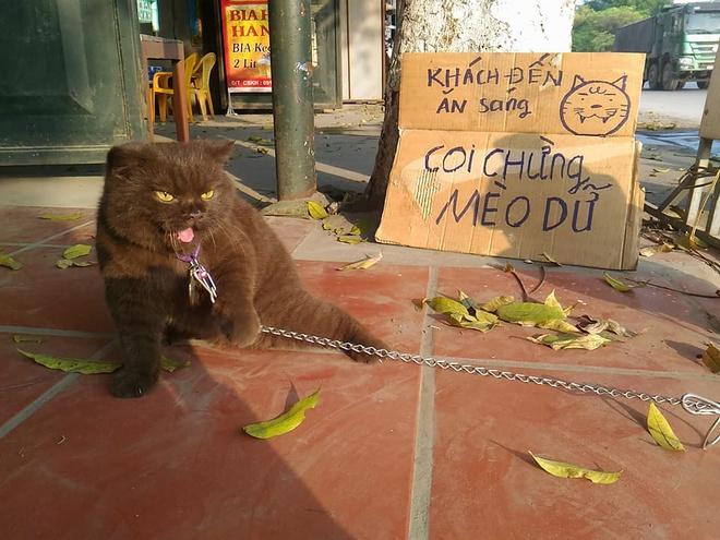 """Mèo """"canh dưa"""" gây bão mạng vì biểu cảm khó ở, ai cũng phì cười vì """"boss"""" suốt ngày dọa dẫm - Ảnh 7"""