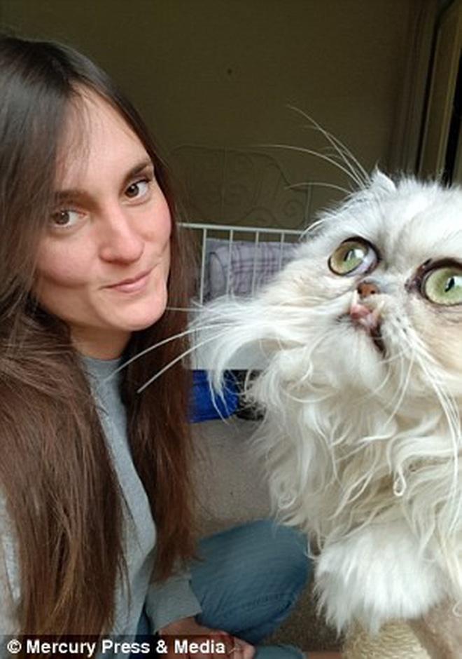 """Mèo """"canh dưa"""" gây bão mạng vì biểu cảm khó ở, ai cũng phì cười vì """"boss"""" suốt ngày dọa dẫm - Ảnh 8"""