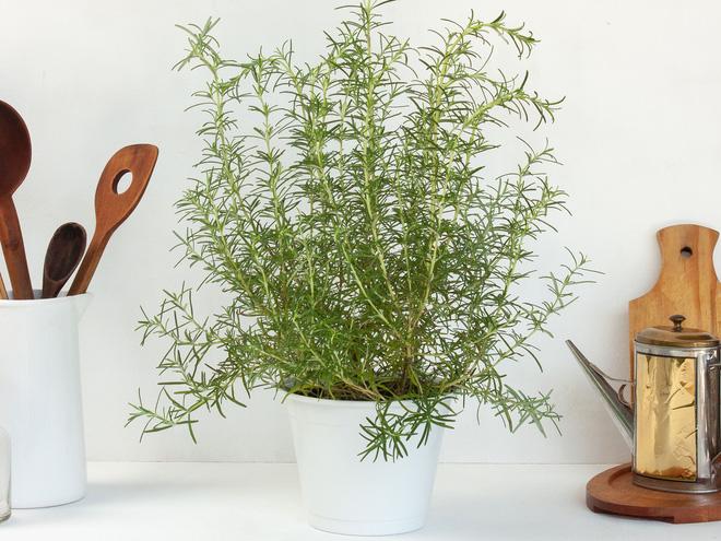 Không cần tinh dầu, ngôi nhà vẫn thơm mát nhờ trồng những cây này - Ảnh 1