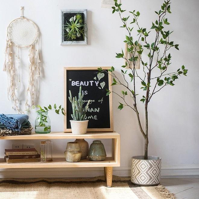Không cần tinh dầu, ngôi nhà vẫn thơm mát nhờ trồng những cây này - Ảnh 4