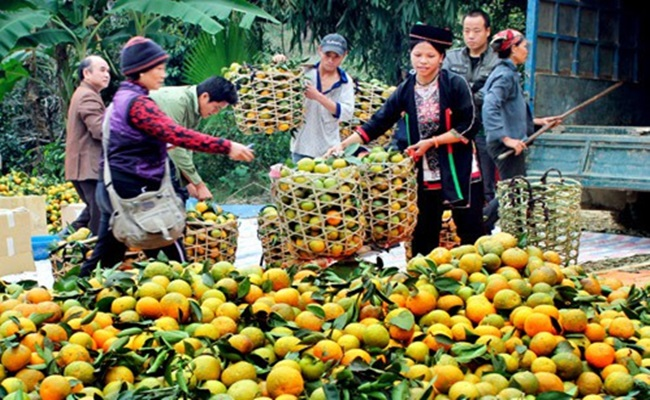 Tậu nhà lầu, xe hơi từ trồng cam, cả làng nhan nhản tỷ phú - Ảnh 6