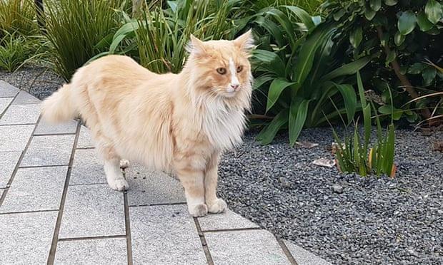 """Tin tức đời sống mới nhất ngày 24/8/2020: Mèo nổi tiếng New Zealand được đề cử """"gương mặt của năm"""" - Ảnh 1"""