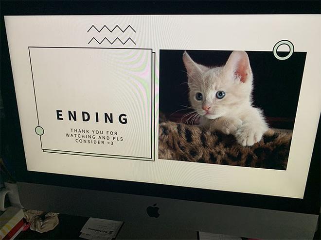 Tin tức đời sống mới nhất ngày 31/8/2020: Bé gái dùng PowerPoint thuyết phục bố mẹ nuôi mèo - Ảnh 1