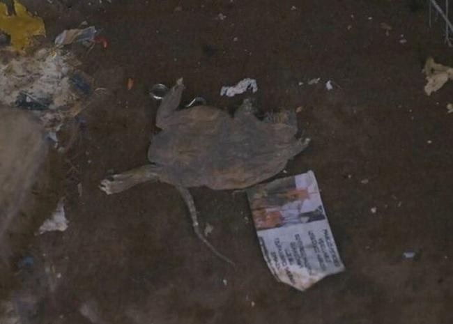 Khám phá căn nhà nhiều rác nhất nước Anh, chuột vào không có đường thoát thân - Ảnh 6