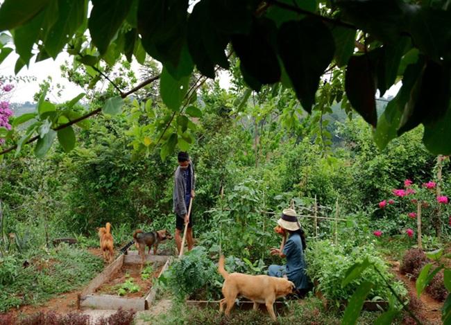 """Cặp vợ chồng 9x bỏ Sài Gòn lên núi làm """"người rừng"""", gây dựng vườn địa đàng đẹp như cổ tích - Ảnh 5"""