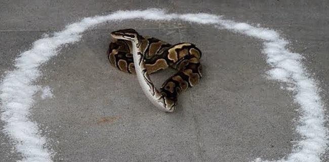"""Lộ diện mùi hương """"sát thủ"""" khiến rắn độc sợ hãi, cả đời không dám tới gần - Ảnh 3"""
