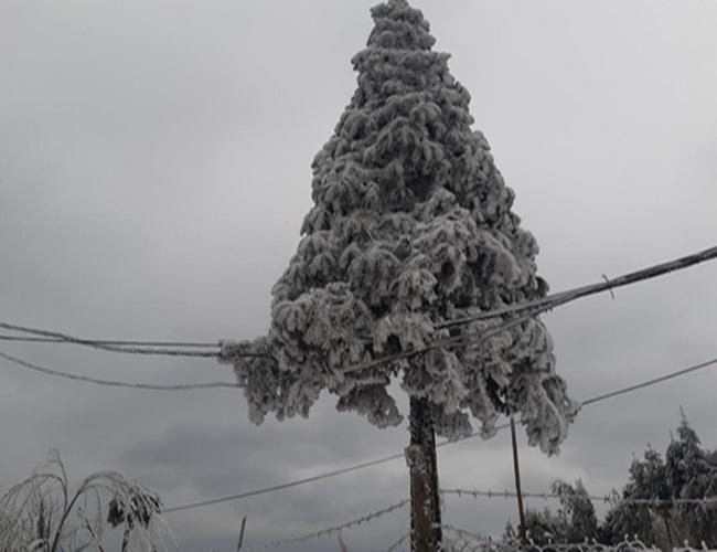 """Tuyết rơi dày đặc Y Tý, cặp đôi chụp ảnh cưới giữa không gian đẹp như """"trời Âu"""" - Ảnh 5"""
