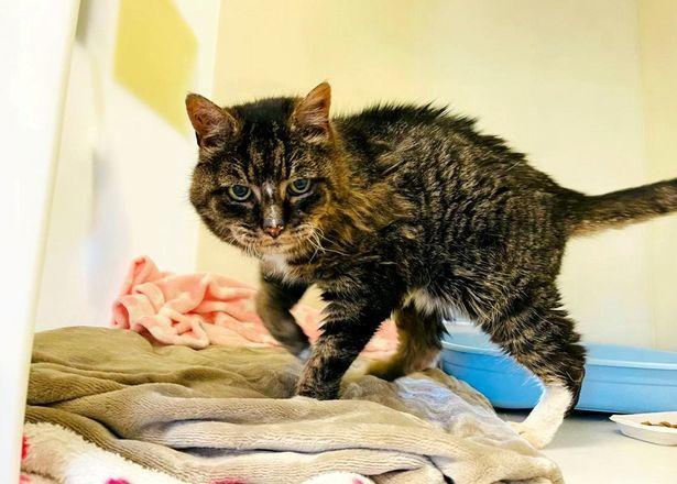 Mèo quay về nhà cũ sau 20 năm mất tích, chủ vui mừng chưa lâu đã đón nhận nỗi buồn vô tận - Ảnh 1