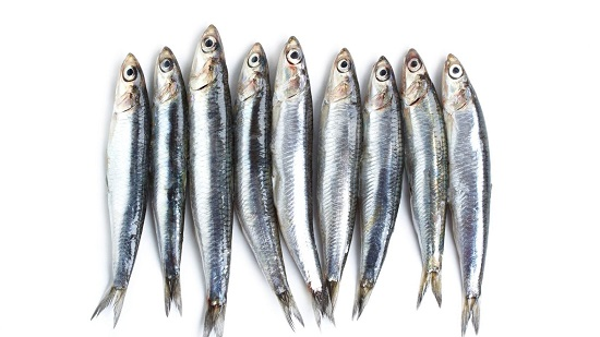 Vi nhựa được tìm thấy trong nhiều mẫu hải sản  - Ảnh 1