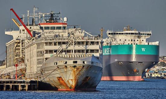 Nhật Bản: Chìm tàu chở 43 thủy thủ và gần 6.000 gia súc - Ảnh 3