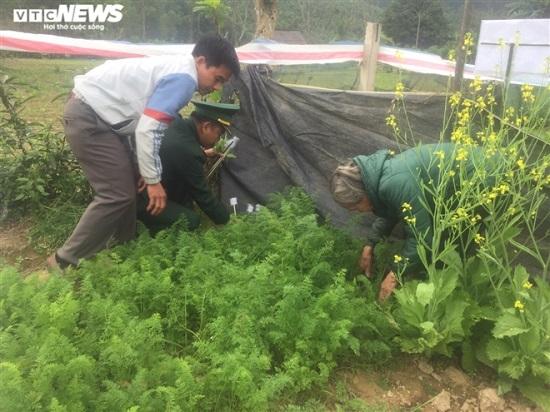 Hà Tĩnh: Phát hiện một gia đình trồng cây thuốc phiện trái phép - Ảnh 1
