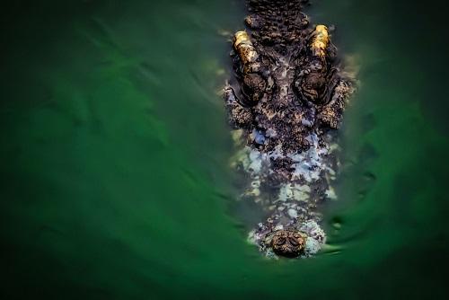 Indonesia: Người đàn ông tử vong vì bị cá sấu tấn công khi đang tắm sông - Ảnh 1