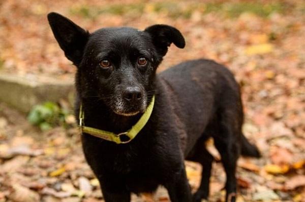Cảm động chú chó mù lầm lũi đi gần 30km tìm về với chủ cũ dù được gia đình mới nhận nuôi - Ảnh 1