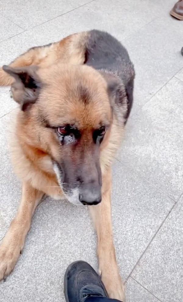 Gặp lại HLV sau nhiều năm, chú chó nghiệp vụ có phản ứng đặc biệt làm ai cũng sững sờ  - Ảnh 2