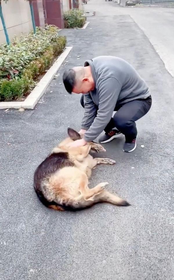 Gặp lại HLV sau nhiều năm, chú chó nghiệp vụ có phản ứng đặc biệt làm ai cũng sững sờ  - Ảnh 1