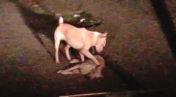 """Thổn thức trước khoảnh khắc chú chó nhỏ cố gắng lay gọi """"người bạn"""" đã chết trong tuyệt vọng - Ảnh 1"""