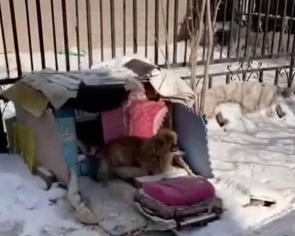 Cảm động chú chó 5 năm ở bãi đậu xe chờ chủ, mắt mờ chân chậm vẫn không từ bỏ hy vọng - Ảnh 1
