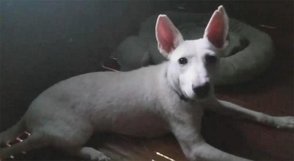 """Chú chó bị lở loét """"lột xác"""" sau vài tháng được nhận nuôi, ai nhìn cũng ngỡ ngàng - Ảnh 4"""