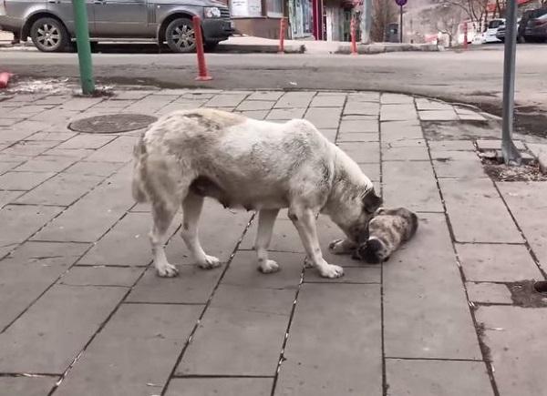 Chó mẹ ngồi thẫn thờ bên con nhỏ bị xe tông chết, hành động trước đó làm ai nấy xót xa - Ảnh 2