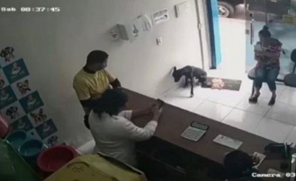 Ngỡ ngàng chú chó hoang tự biết vào phòng khám thú y khi bị thương - Ảnh 1