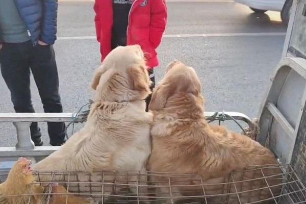 """Cùng phận bị đem ra chợ bán, chú chó cố """"lau"""" nước mắt cho bạn làm ai nấy nhói lòng - Ảnh 2"""
