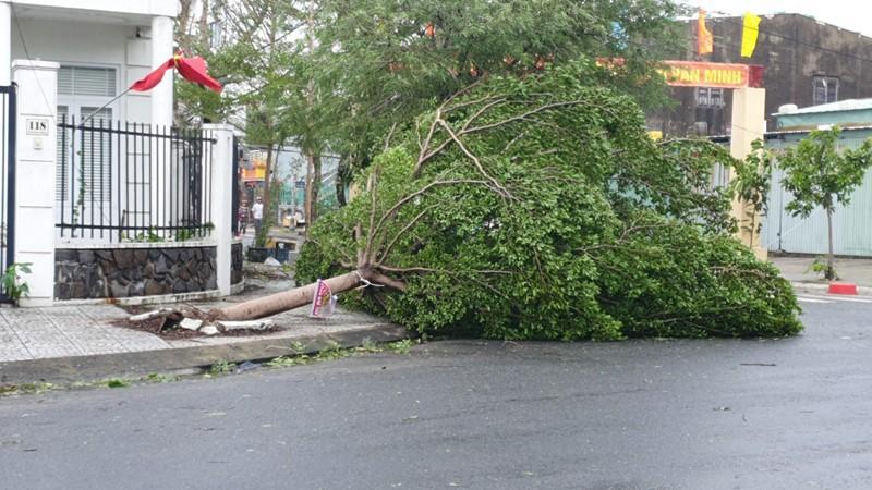 Đà Nẵng: Đường phố ngổn ngang, bờ biển tan hoang sau bão số 9 - Ảnh 1