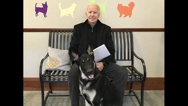 Ứng viên Tổng thống Joe Biden bị chấn thương khi chơi đùa với chó cưng - Ảnh 1