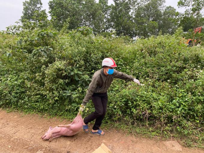 Kinh hãi gần trăm con lợn bệnh chết bị vứt bỏ ven đường - Ảnh 1