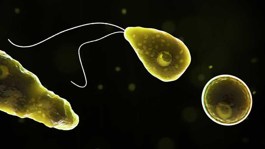 Mỹ: Xuất hiện ca tử vong đầu tiên sau khi phát hiện amip ăn não cực hiếm trong nguồn nước sinh hoạt - Ảnh 1