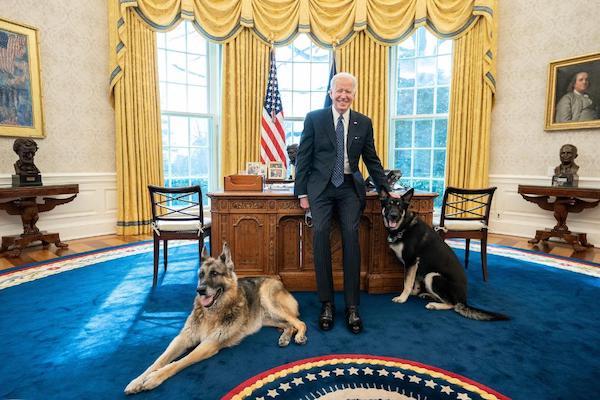 """Chó cưng của Tổng thống Biden phải """"về quê"""" sau khi lỡ cắn một mật vụ Mỹ - Ảnh 1"""