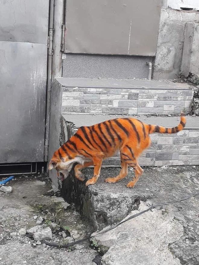 """Rụng rời vì """"con hổ"""" đi lại trong xóm, nhìn vào phần mõm của nó không thể nhịn được cười - Ảnh 1"""