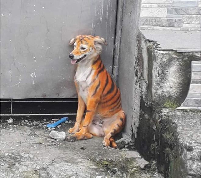 """Rụng rời vì """"con hổ"""" đi lại trong xóm, nhìn vào phần mõm của nó không thể nhịn được cười - Ảnh 3"""