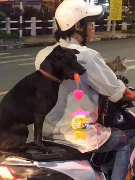 """Chú chó """"hot"""" trên MXH: Sáng xách cặp lồng đi chơi, tối mang đèn dạo phố - Ảnh 2"""