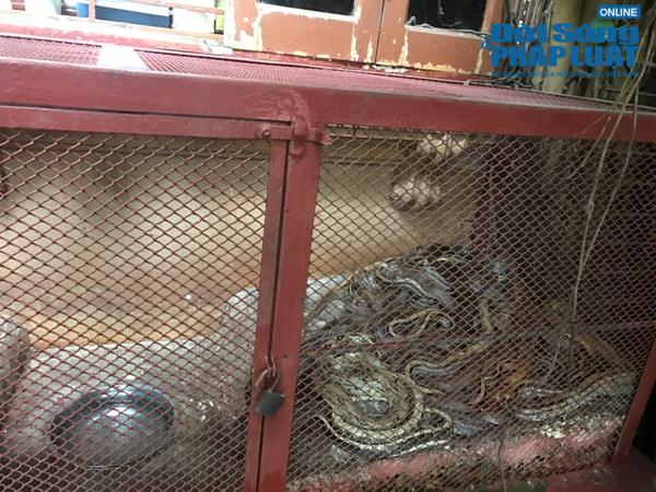Lạnh gáy nghề chăn bắt rắn tại làng Lệ Mật: Suýt mù mắt vì rắn phóng độc - Ảnh 2