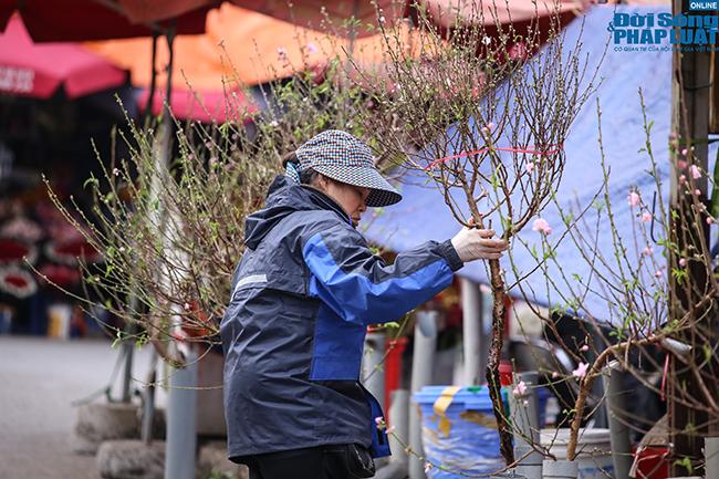 Thời tiết rét đậm, đào Nhật Tân xuống phố báo hiệu cái Tết đã cận kề  - Ảnh 4