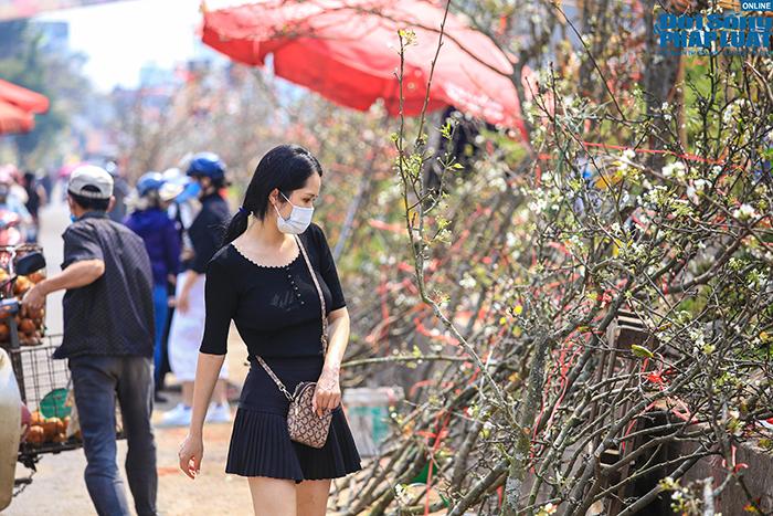 Hoa lê rừng xuống phố khoe sắc, nhà giàu Hà Nội đổ xô đi mua  - Ảnh 2