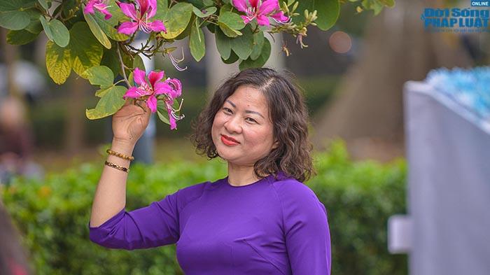 Hoa ban Tây Bắc nở rộ đẹp nao lòng trên đường phố Hà Nội - Ảnh 6