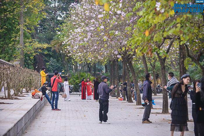Hoa ban Tây Bắc nở rộ đẹp nao lòng trên đường phố Hà Nội - Ảnh 1