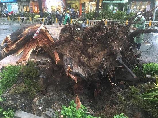 Người bị cây cổ thụ đè trên đường Nguyễn Tri Phương đã qua đời - Ảnh 1