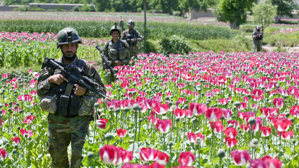 canh dong hoa thuoc phien o afghanistan dspl 10