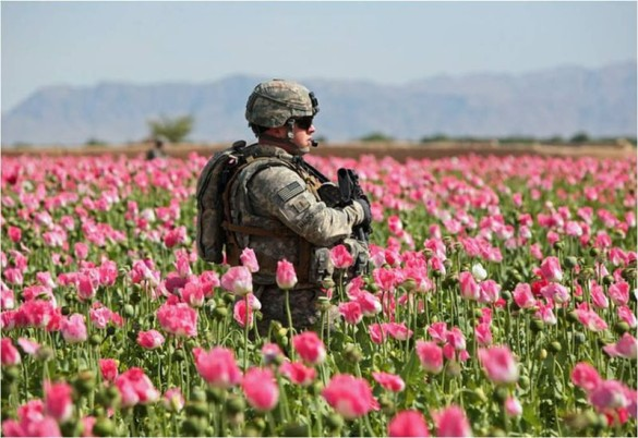 canh dong hoa thuoc phien o afghanistan dspl 4