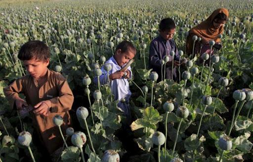 taliban ra lenh cam trong thuoc phien gia nguyen lieu che heroin tang vot o afghanistan dspl dspl