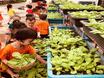 Trường Mầm non Lý Khánh Văn làm tốt công tác đảm bảo vệ sinh an toàn thực phẩm năm học 2019 – 2020
