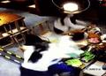 Tin thế giới - Đang ăn tối cùng bạn, nam thanh niên bị hất cả nồi lẩu vào người