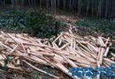 Nóng trong tuần - Vụ tranh chấp đất rừng: Hai bìa đỏ trên một mảnh đất