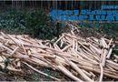 Nóng trong tuần - Vụ tranh chấp đất rừng: Người dân khát khao một mảnh đất sản xuất
