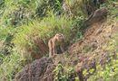 Tin trong nước - Truy tìm nguồn gốc con khỉ